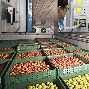 Wie können Obst und Gemüse erntefrisch gelagert werden?