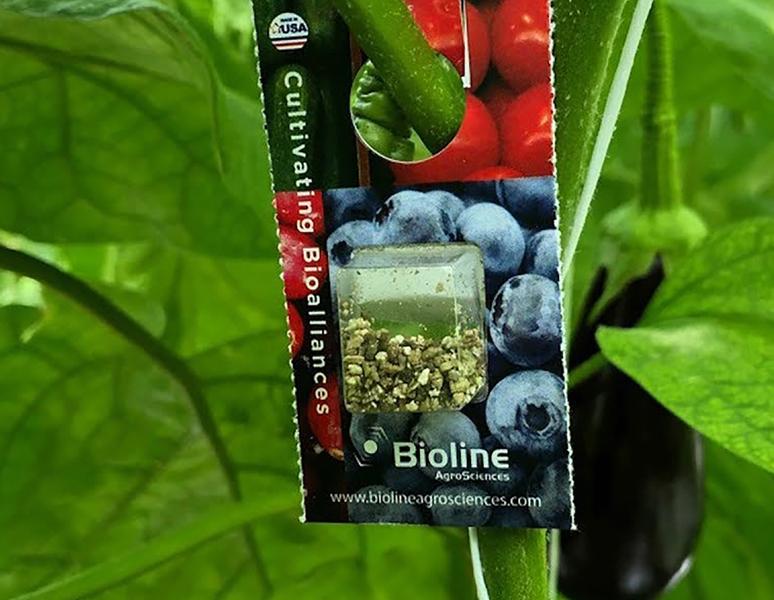 Amélioration des contrôles pour la protection biologique des plantes